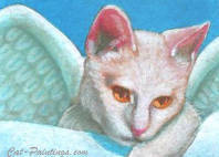 aceo angel cat