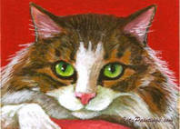 aceo maine coon cat
