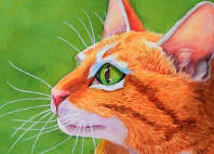orange tabby cat paintings