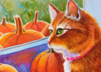 orange tabby cat pumpkin